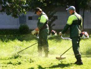 """Начинает работу студенческий отряд """"Зеленый город"""""""